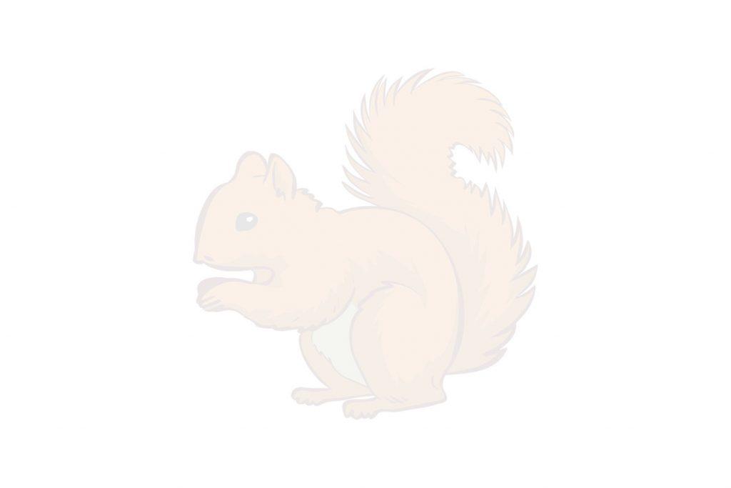 Coloriage d'écureuil avec sa noisette